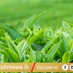 TEA LEAVES-UTV-NEWS