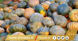 PUMPKIN -UTV -NEWS