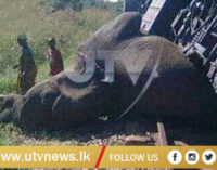 Train hits Five Elephants in Puwakpitiya