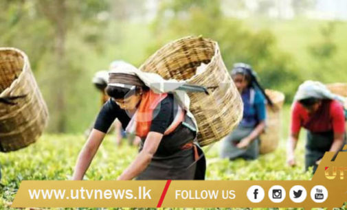 Unions agreed to increase basic daily salary of plantation workers