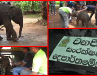 Baby elephant fallen into well rescued