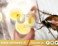 Underperforming Chinese workers made to drink urine, eat bugs