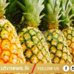 PINE APPLE UTV NEWS