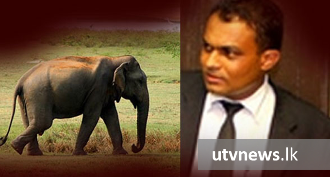 Elephant calf case: AG files indictments against Thilina Gamage
