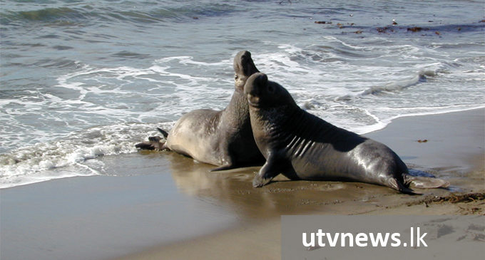 Public requested to refrain from harming elephant seal