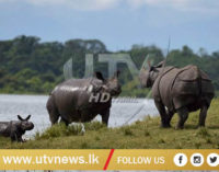 China decides to shelve plans of lifting ban on trade of rhino horn, tiger parts