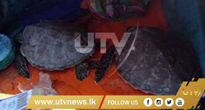 Three turtle catchers nabbed by Navy